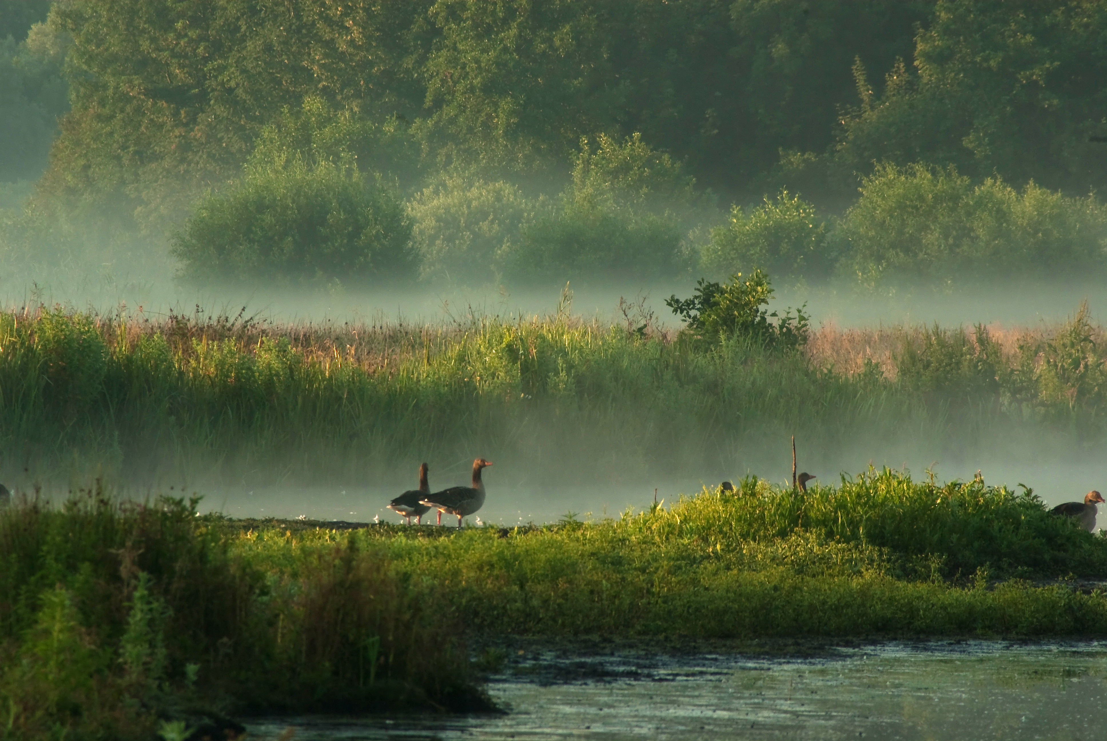 In Misty Morningland